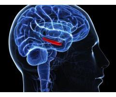 http://ketoplanusa.com/amazin-brain/